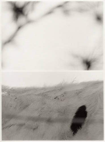 5063__630x500_moldenhauer-leafburstscowspot-1982-1985_.jpg