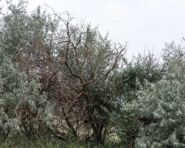 Meghan L. E. Kirkwood,  Trees Near Grassy Butte,  2017