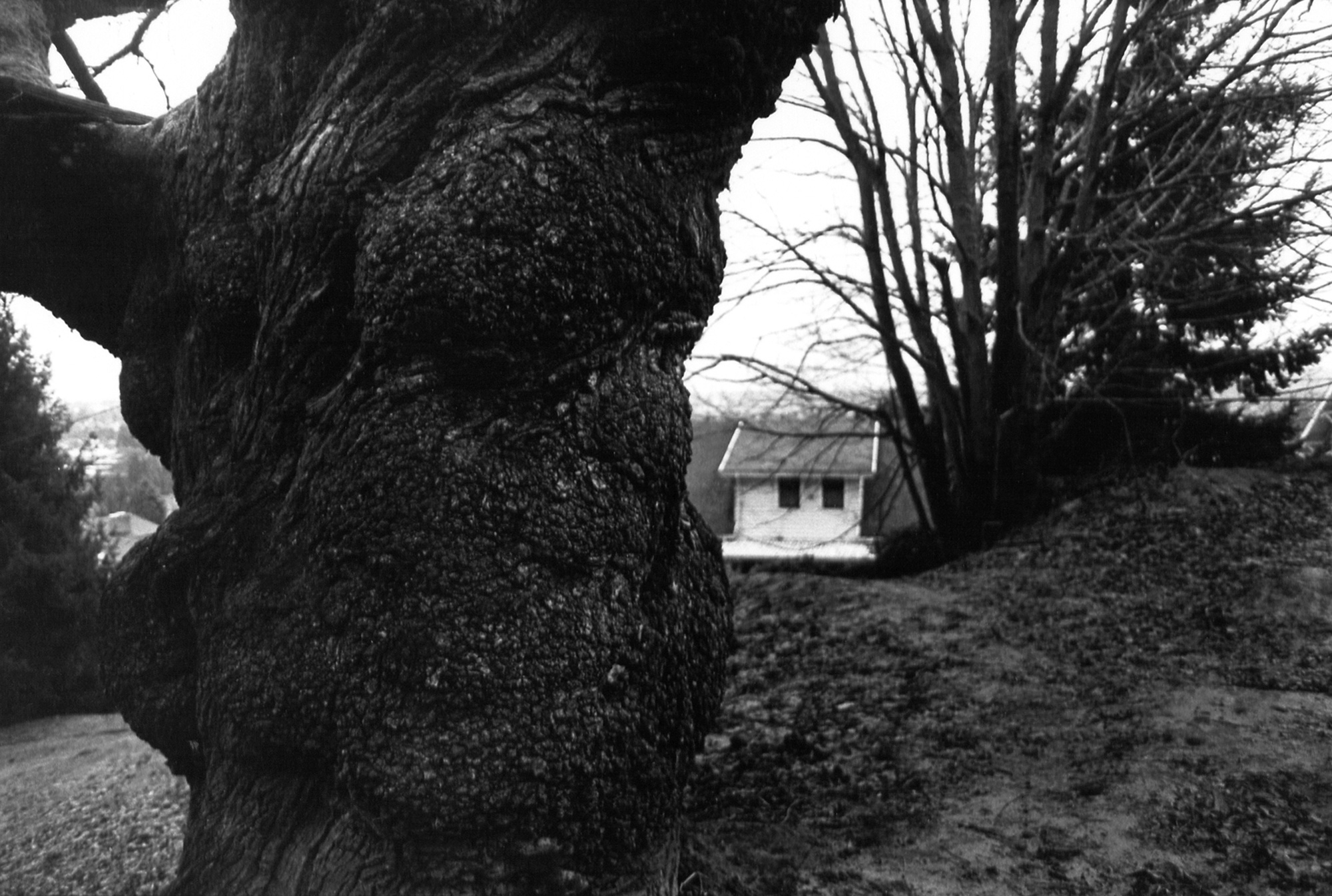 11_kendellen_1999_mttabor_tree.jpg