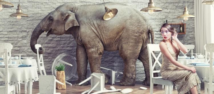 elephant+blog-image-750x330.jpg