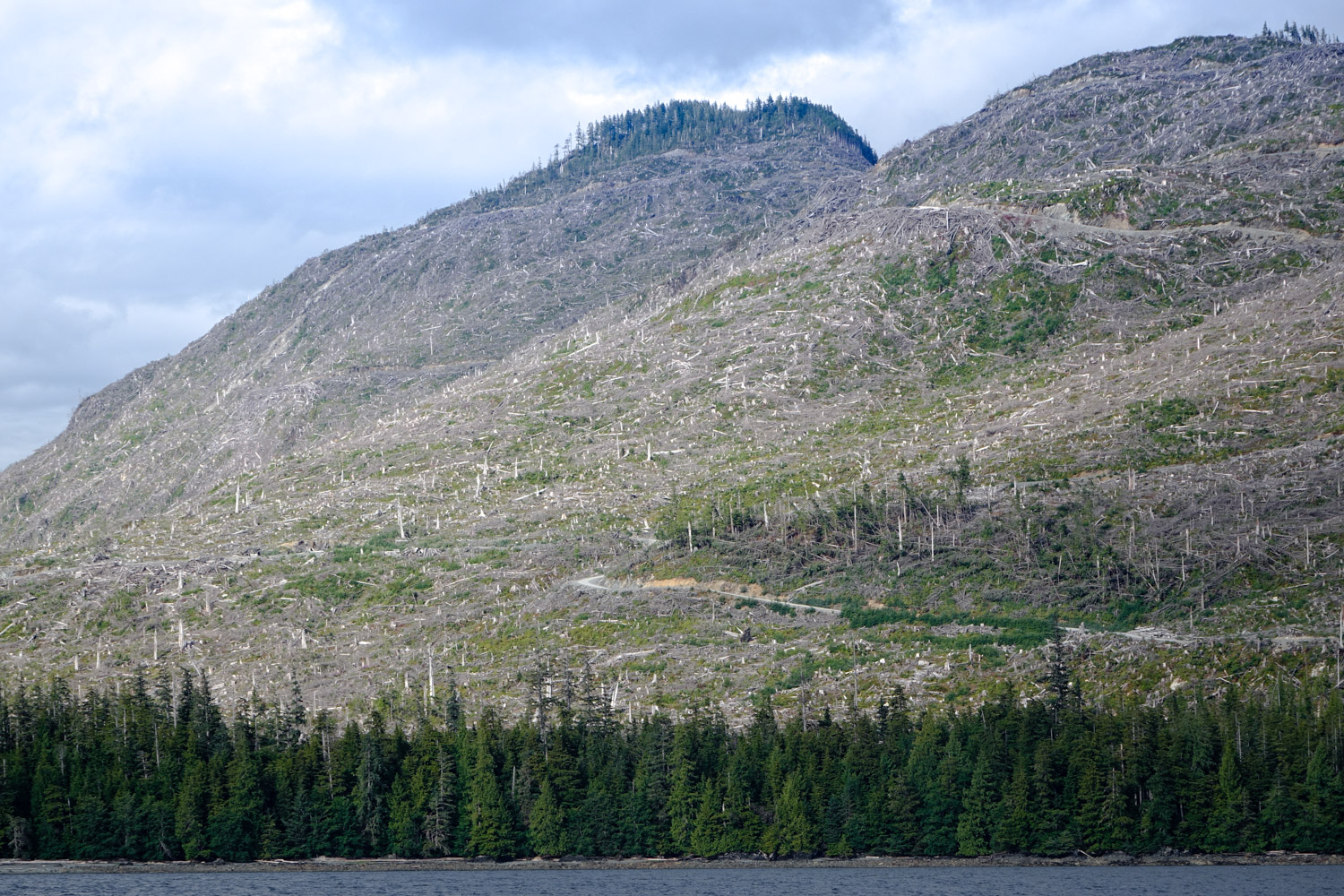 Under Alaska law there is no limit on the size of a clearcut.