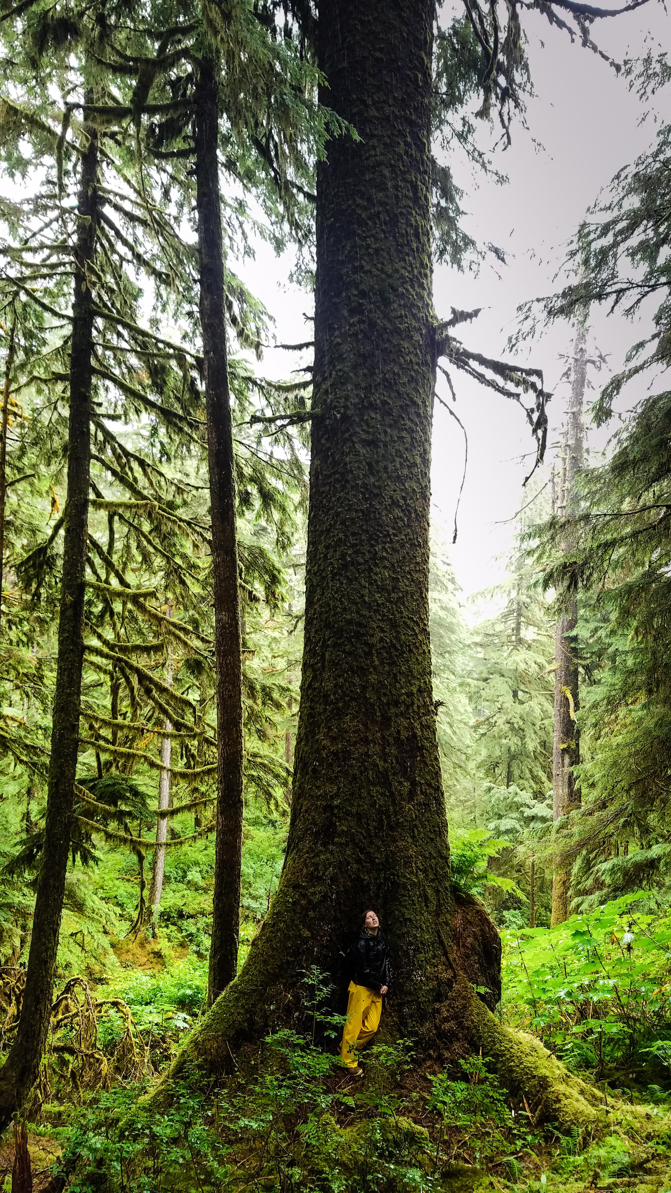 spruce (1 of 1).jpg