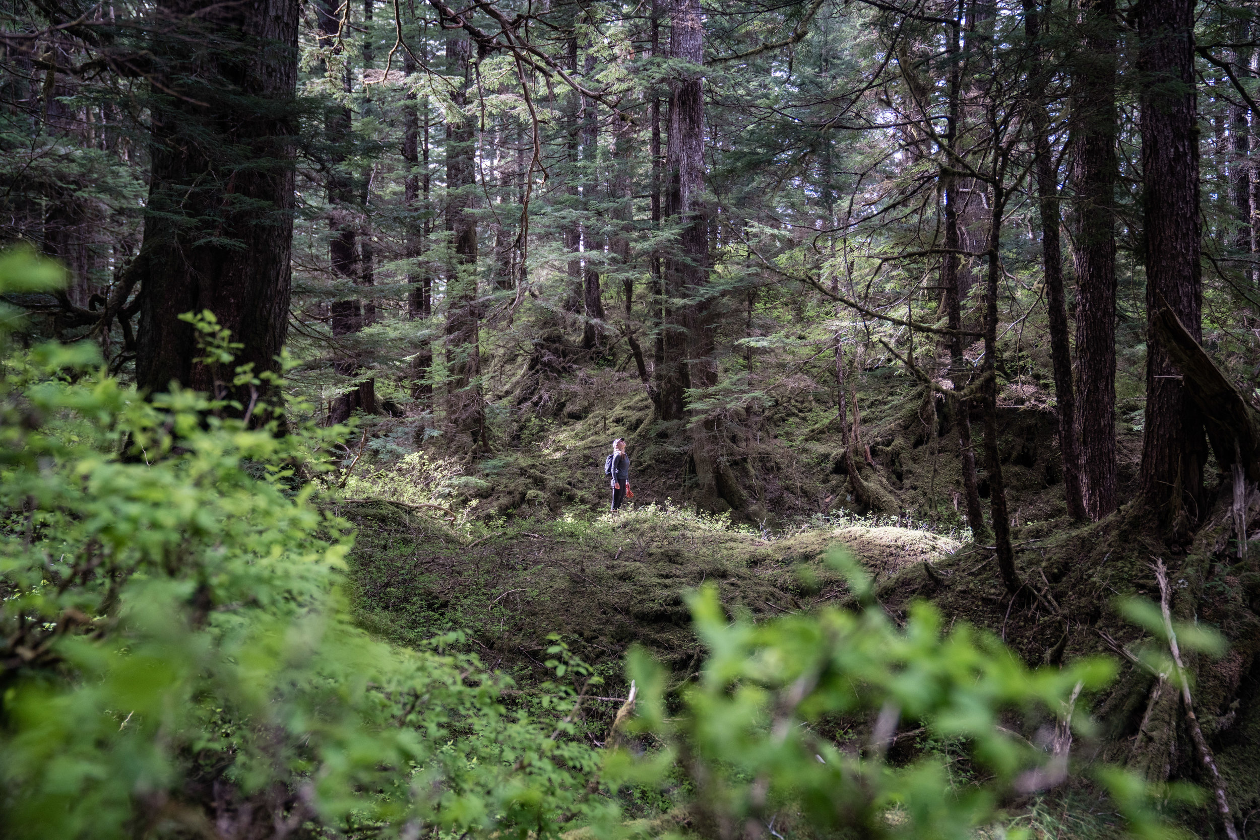 Mara in the midst of old-growth forest. Old-growth is characterized by many ages of trees, large and small, in an intricate and constantly evolving dance for light. Photo: Colin Arisman.