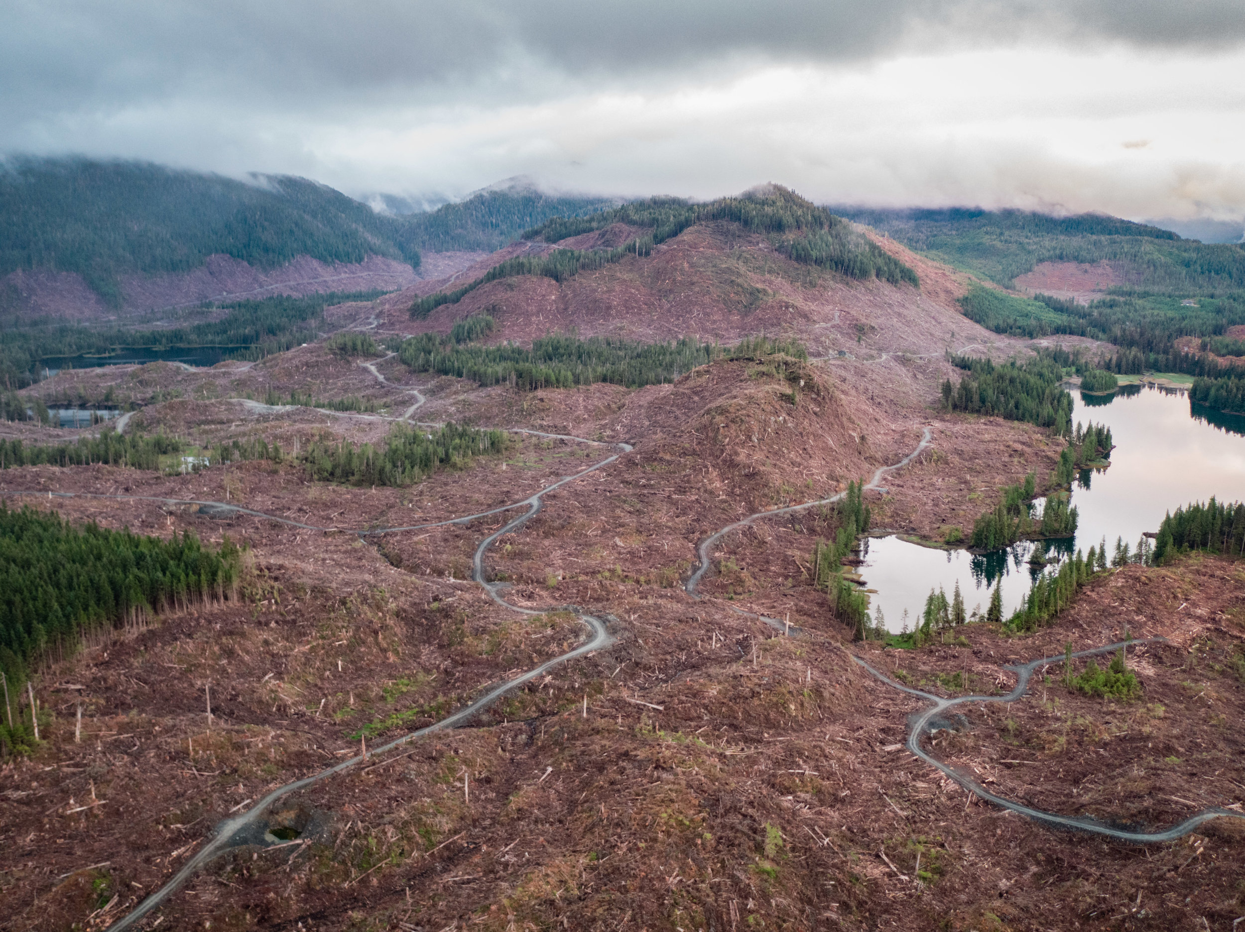 McKenzie Inlet clearcut. Photo: Colin Arisman.