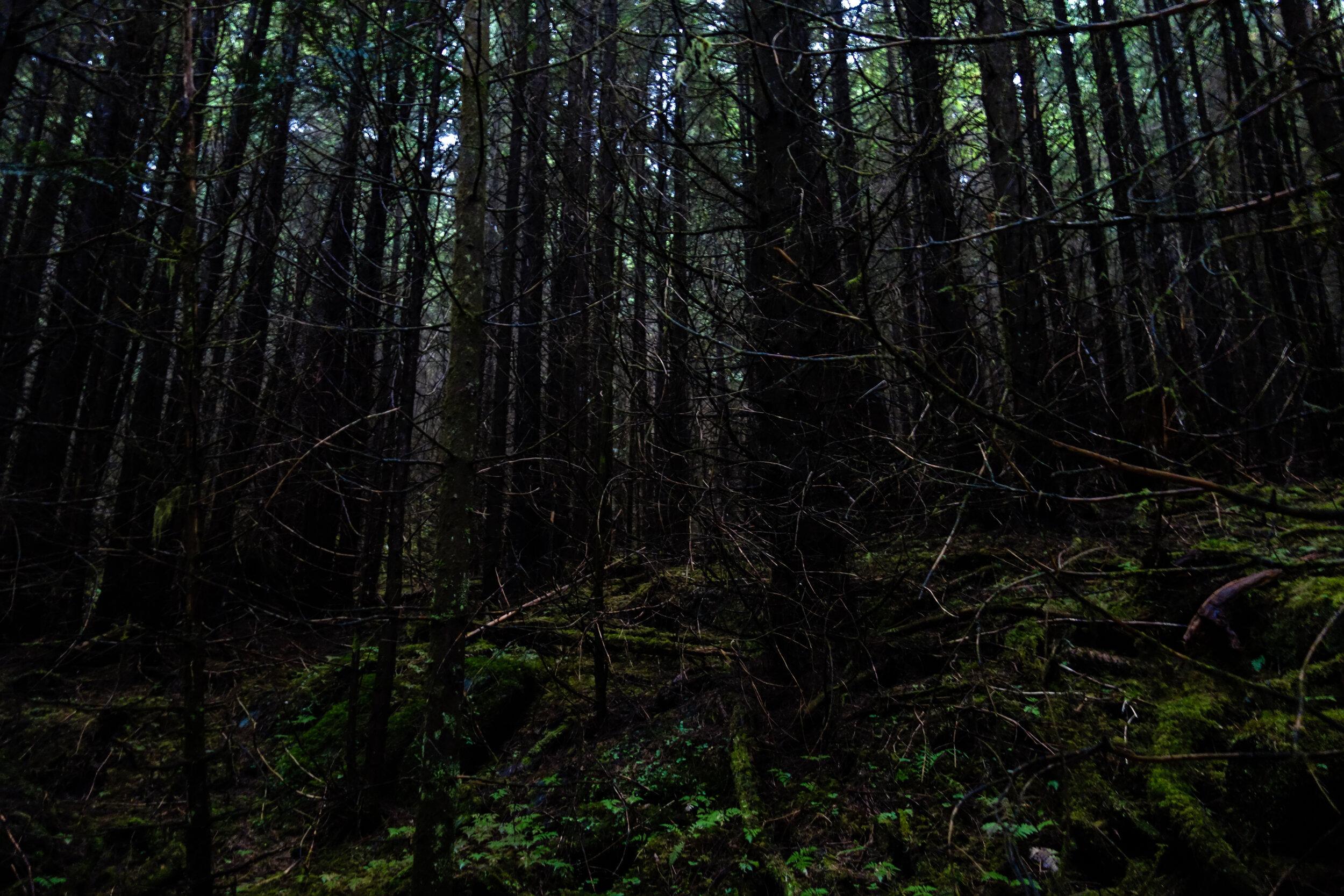 Stem-exclusion forest. Photo: Natalie Dawson