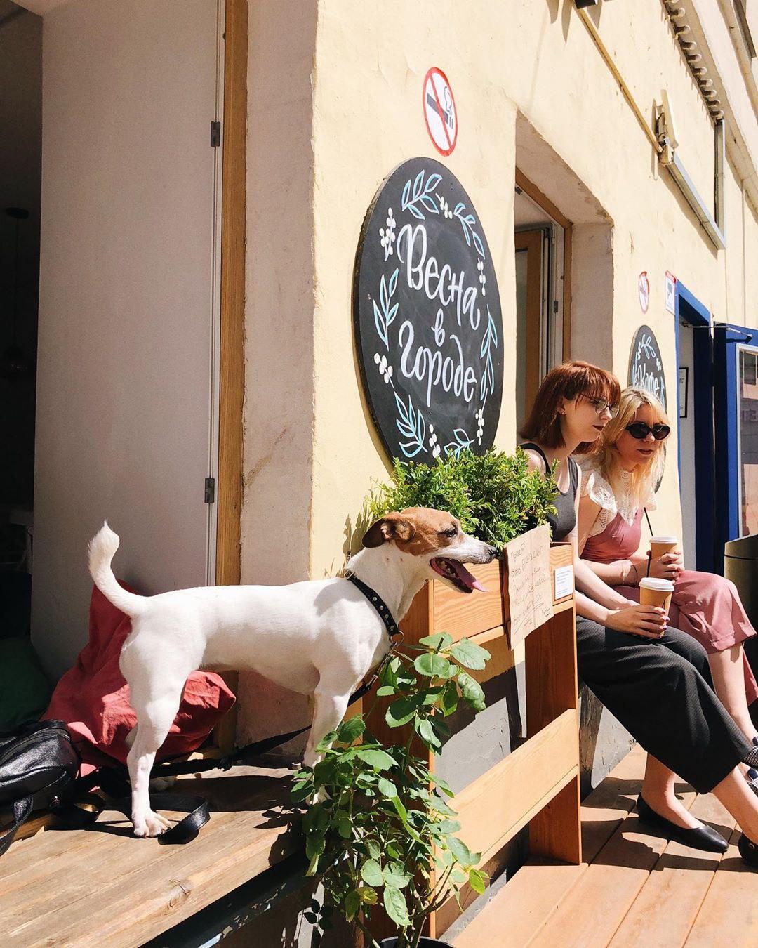 Собака и летняя веранда в hygge кофейне Розетка и кофе