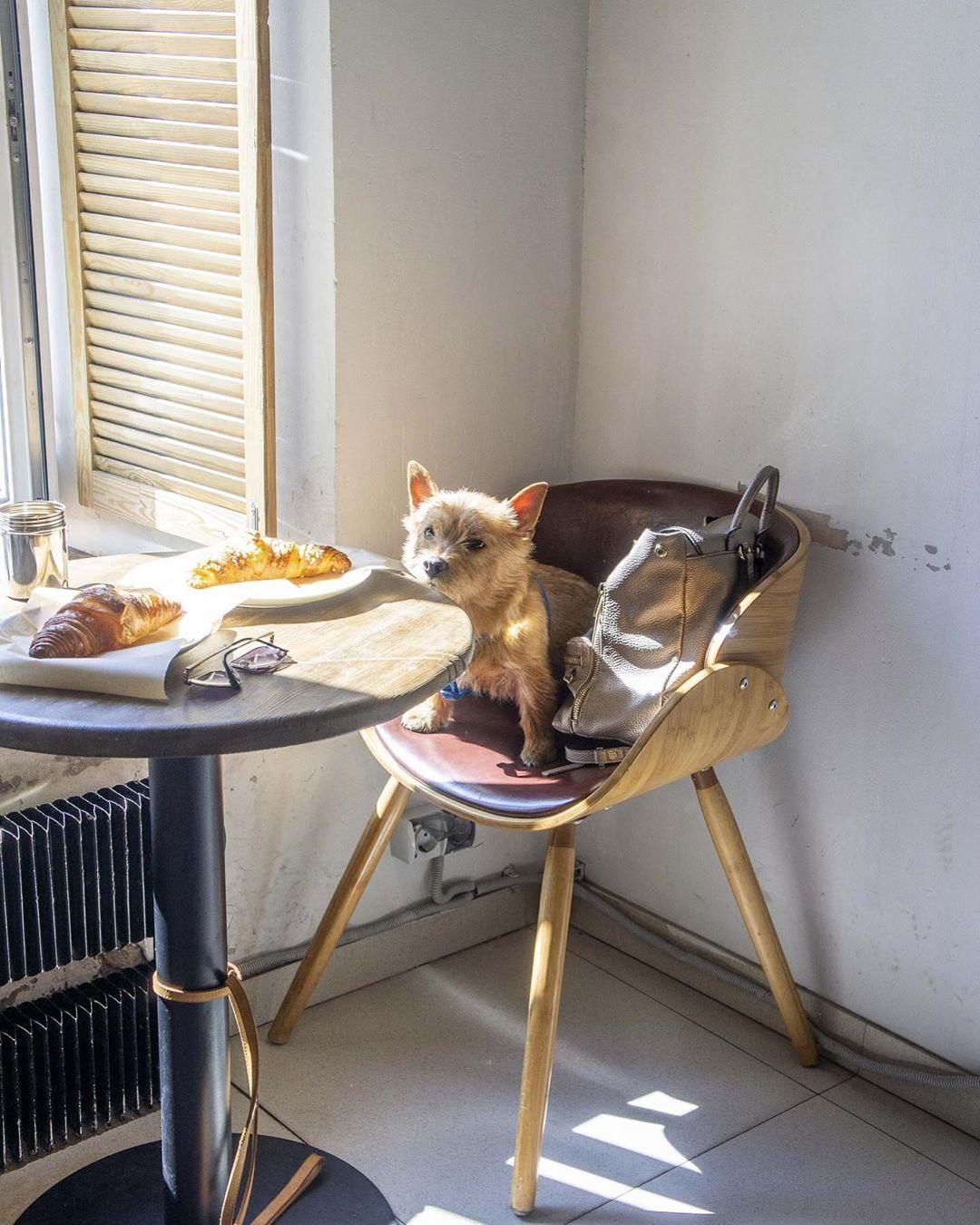 Собака и круассаны в кофейне David B. Café