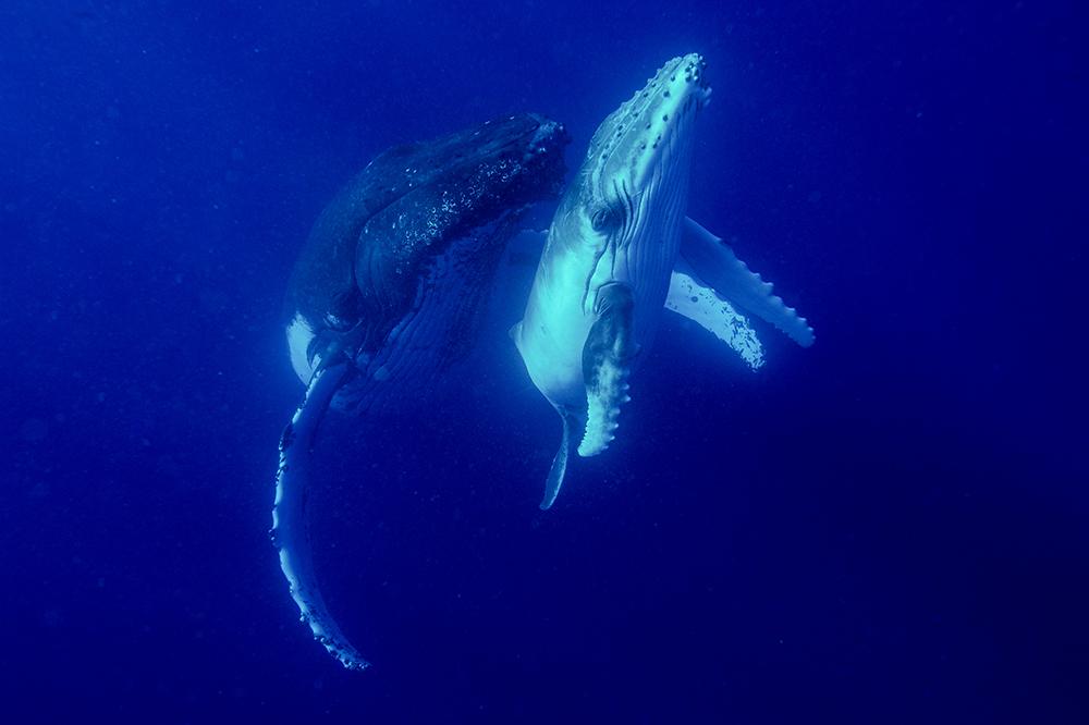Amos Nachoum_United States_Big Animals_04.jpg