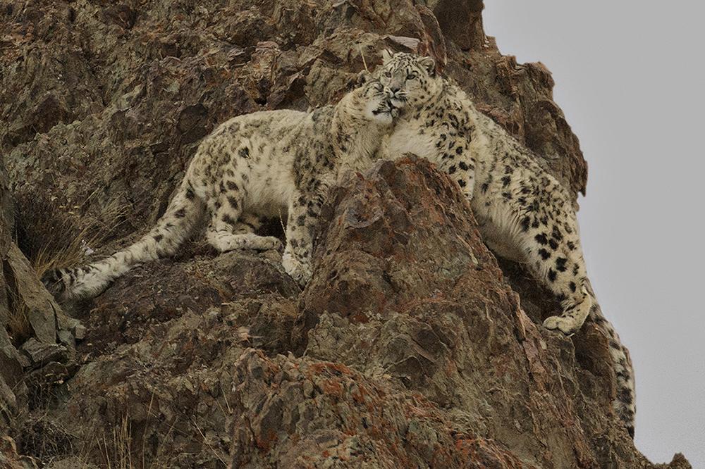 Amos Nachoum_United States_Big Animals_03.jpg