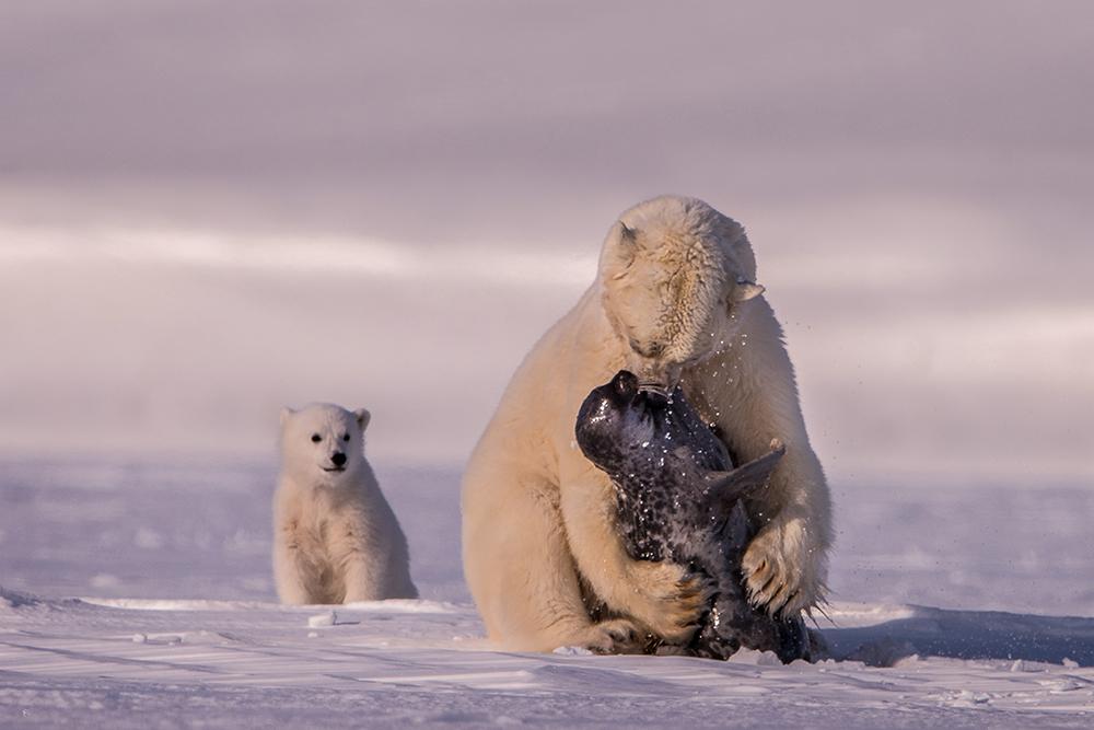 Amos Nachoum_United States_Big Animals_06.jpg
