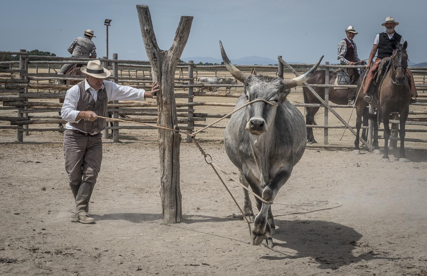 Gabrielle Saveri_USA_Italian Cowboys (I Butteri) (4 of 15).jpg