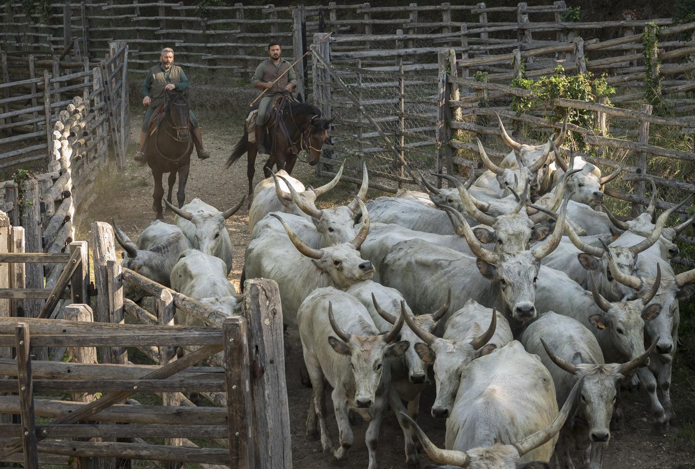 Gabrielle Saveri_USA_Italian Cowboys (I Butteri) (9 of 15).jpg