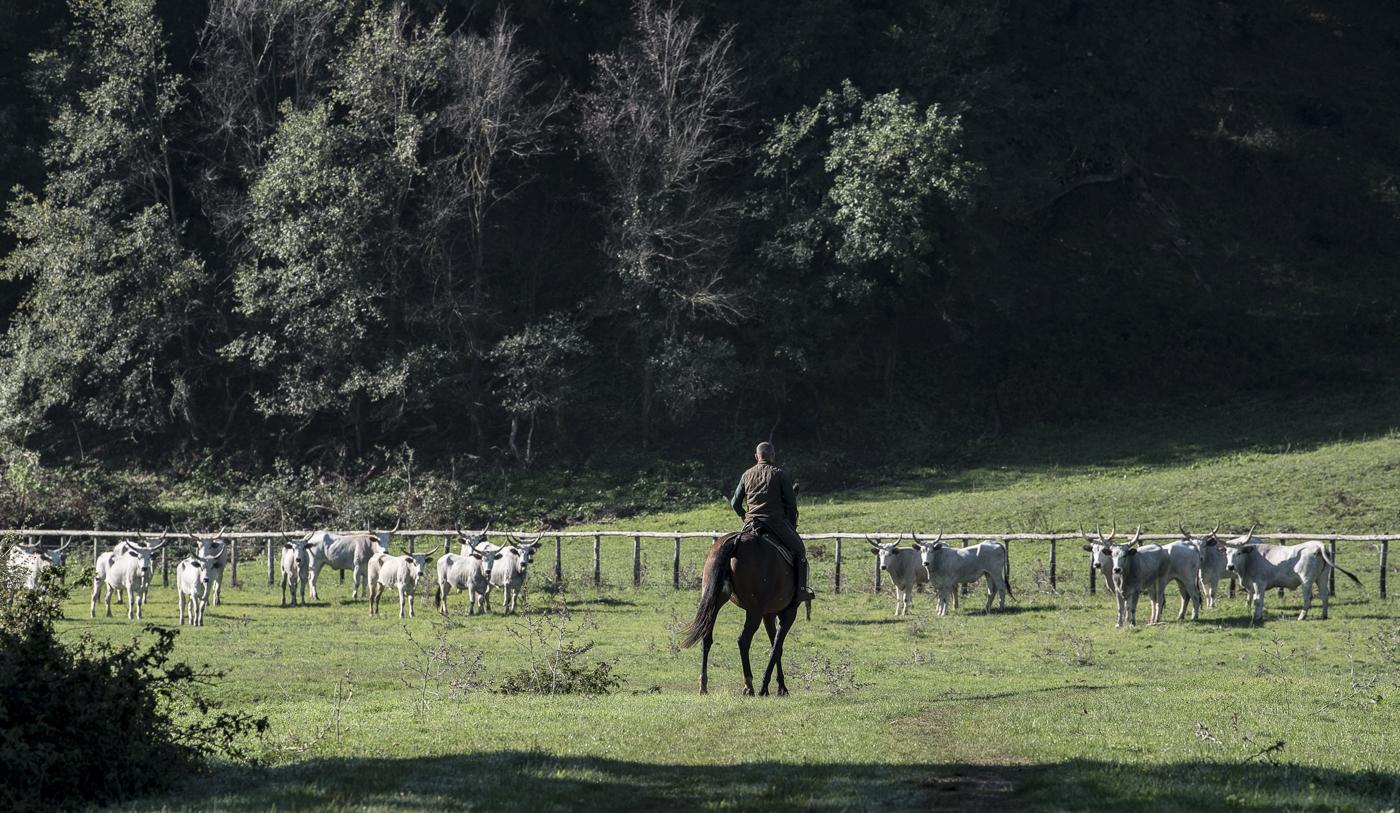 Gabrielle Saveri_USA_Italian Cowboys (I Butteri) (10 of 15).jpg