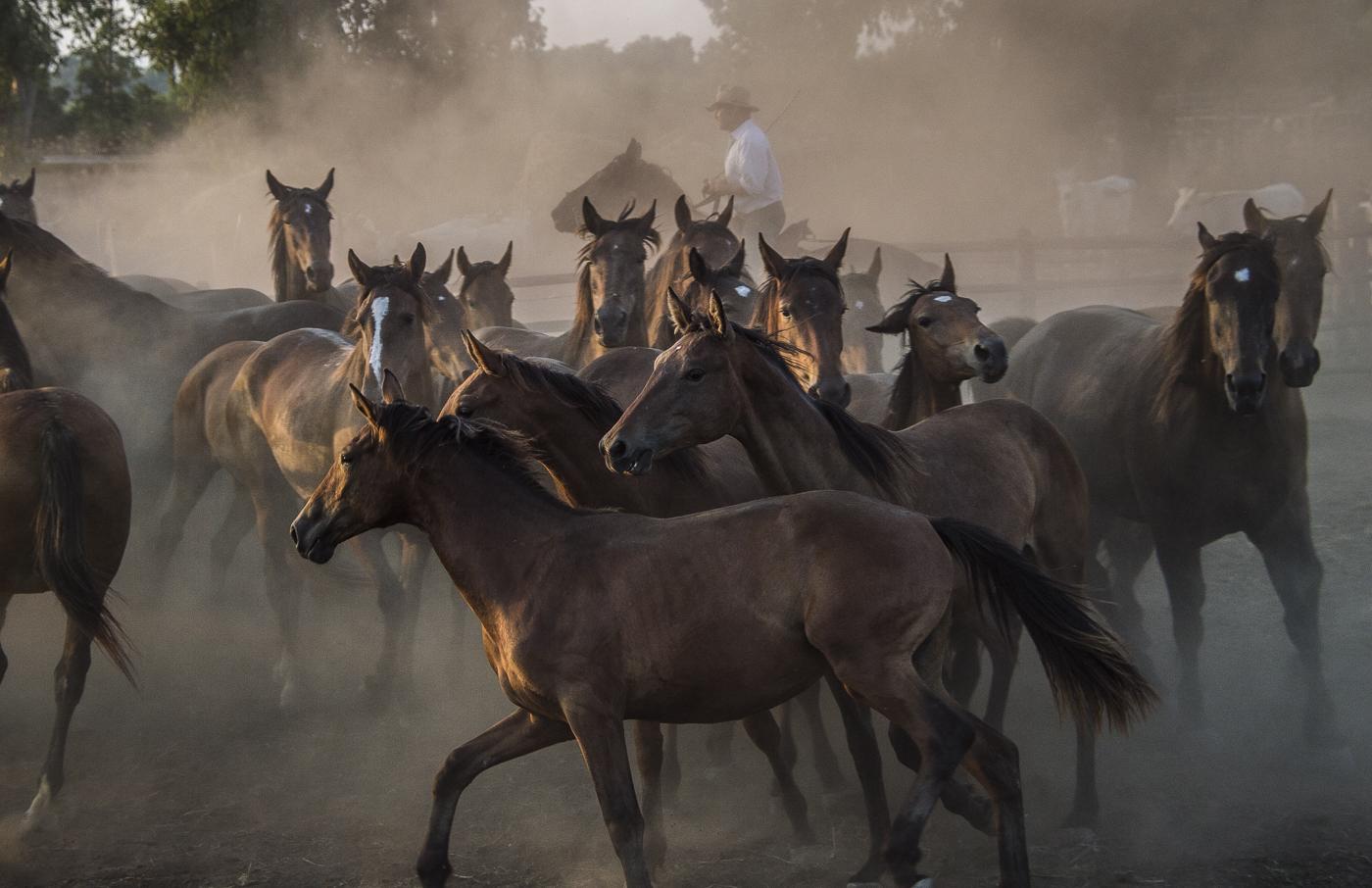 Gabrielle Saveri_USA_Italian Cowboys (I Butteri) (12 of 15).jpg