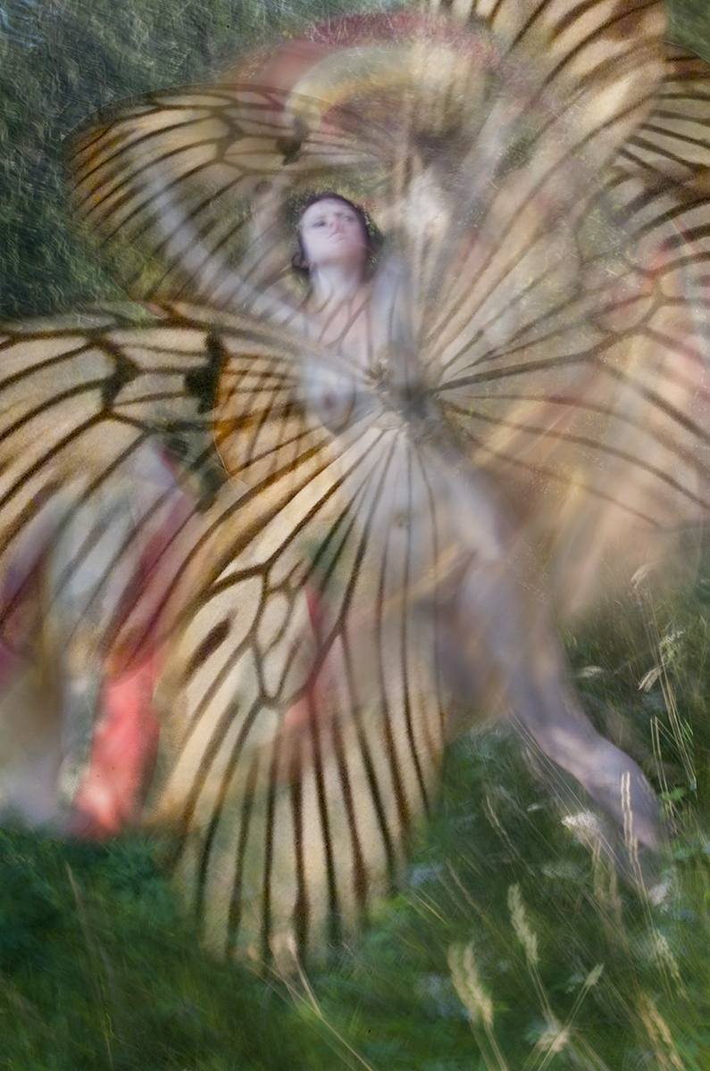 Brandeis_Ann_Tiger Moth.jpg