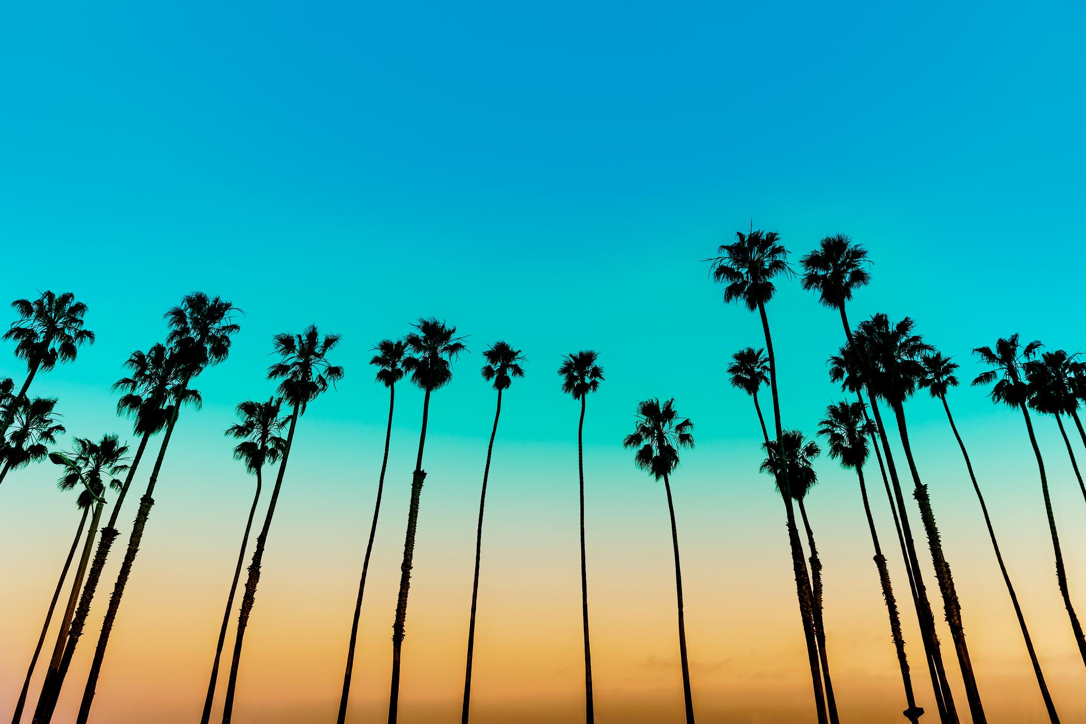 SB Palms.jpg