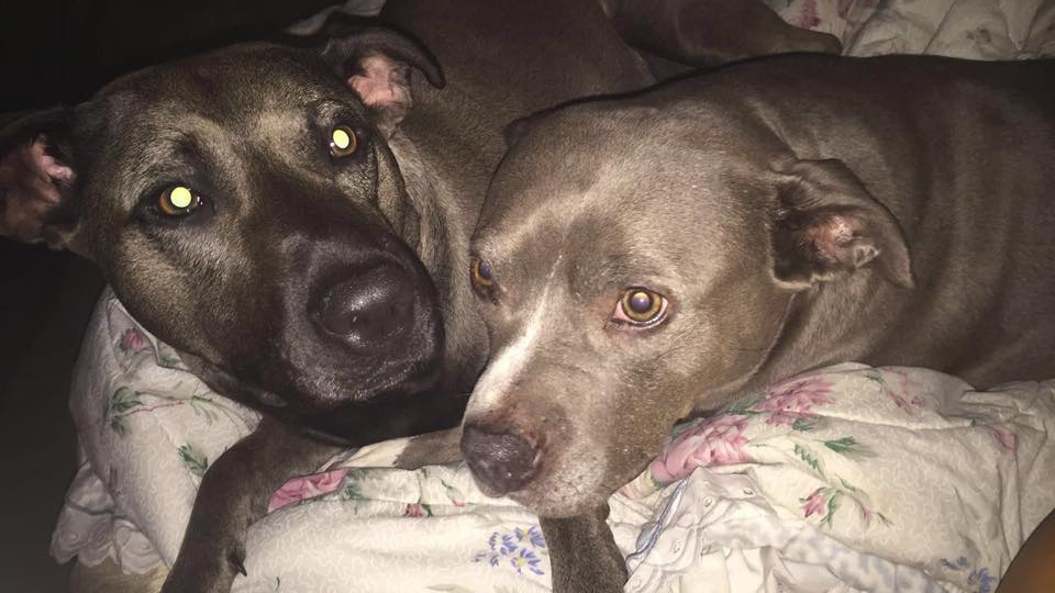 This is Mia and Sasha, submitted by Bryanna