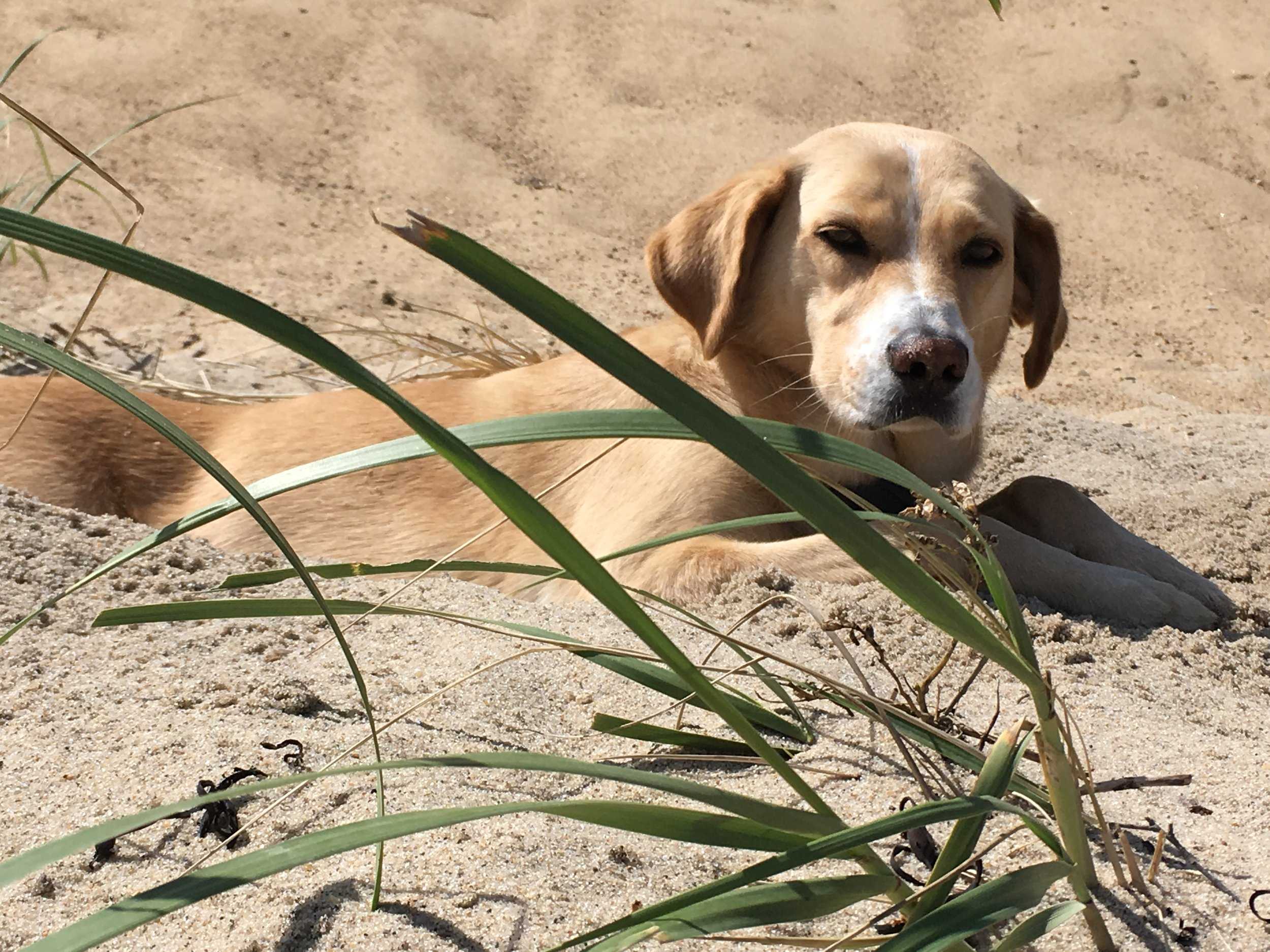 Juno, who would like our beaches to stay right where they are, thank you, submitted by Mike