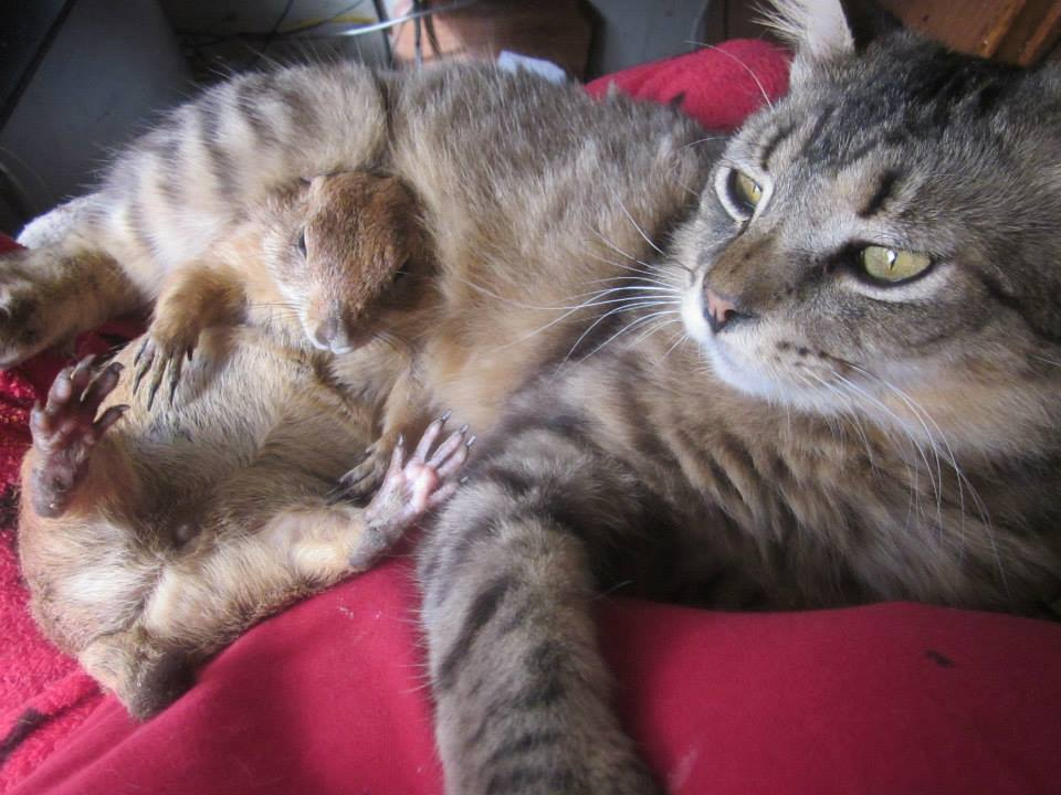 Pepé le Mew the cat and, Gavroche, the prairie dog, who know solidarity comes in all forms, submitted by Kell-y
