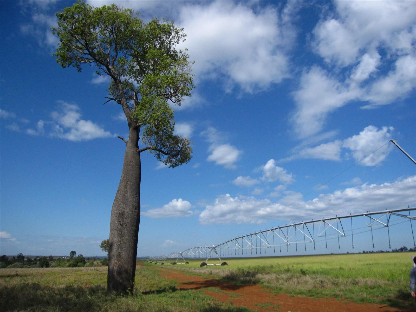 Soil Moisture Probes
