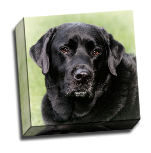 Fine Aret Canvas Wrap of Black Labrador