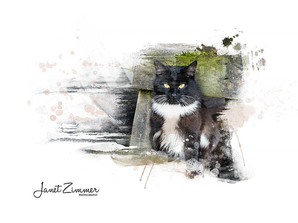 Photo Art Style Cat Portrait