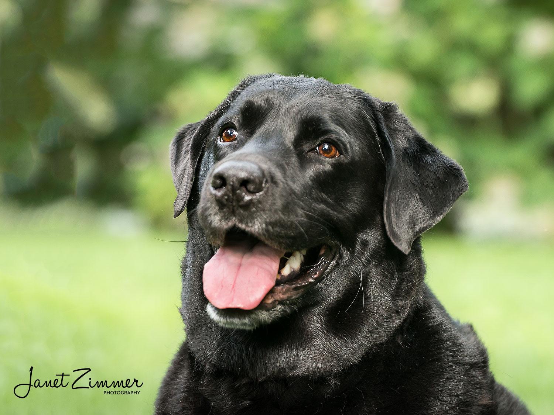 Natural light portrait of black dog.