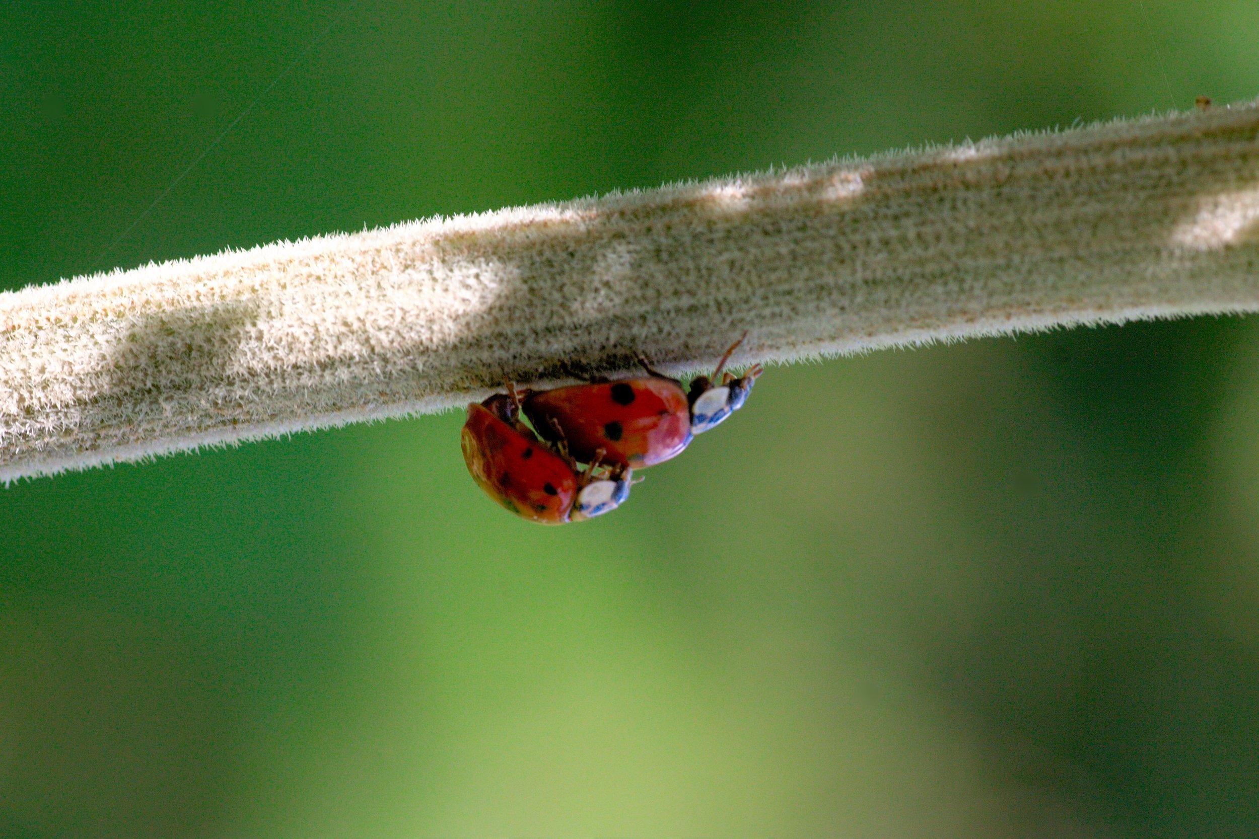 nature-photography-leaf-animal-love-green-1246896-pxhere.com.jpg