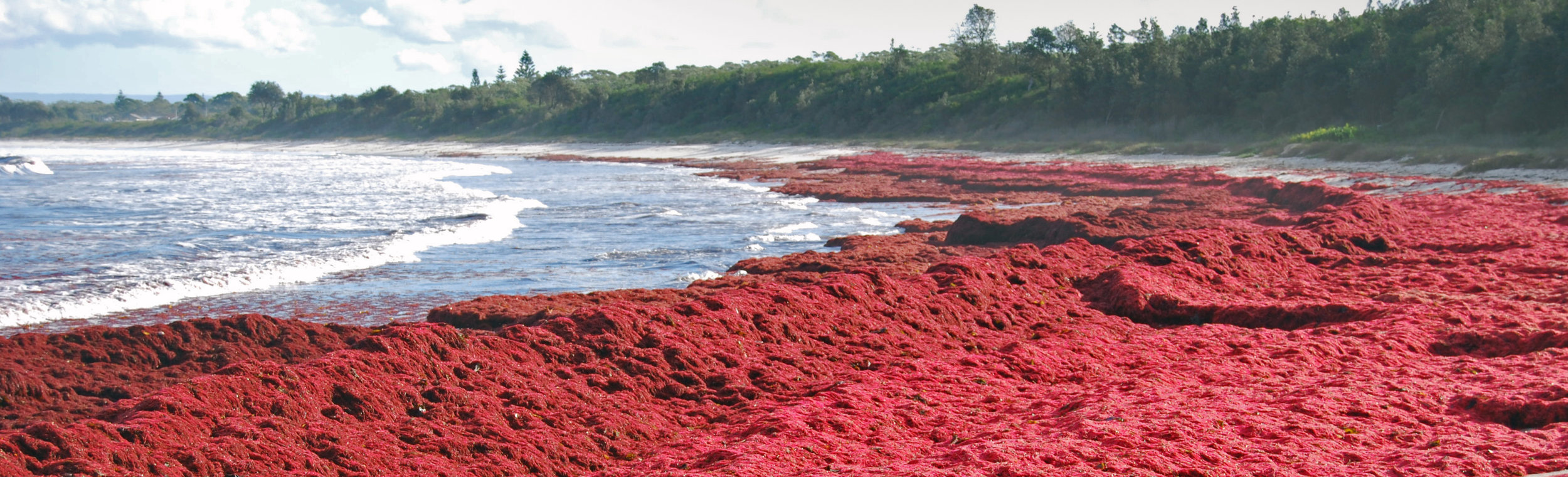 irish sea moss benefits