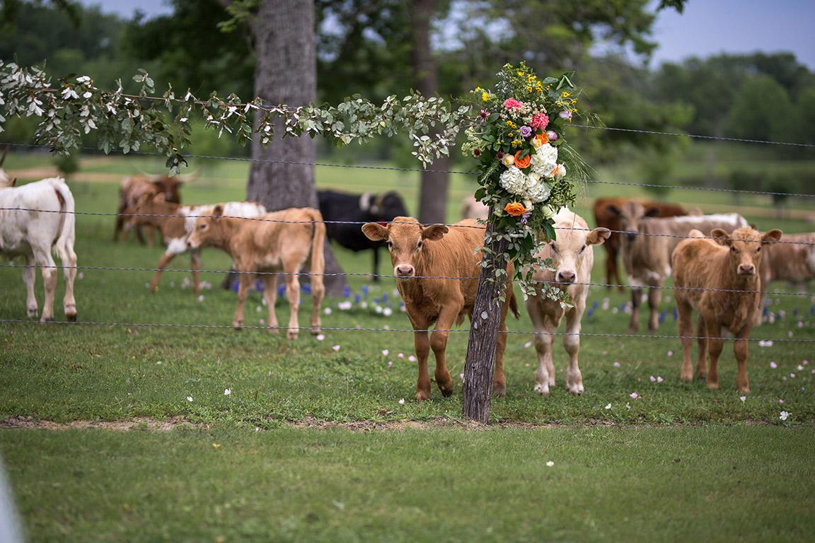 calfs_flowers.jpg