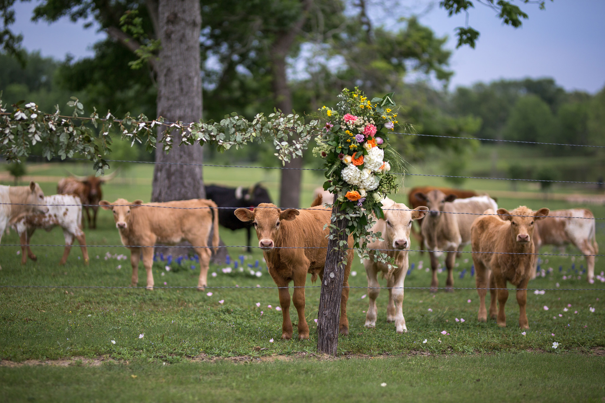 GaryBlakePhoto_Starhill_Wedding_093.jpg