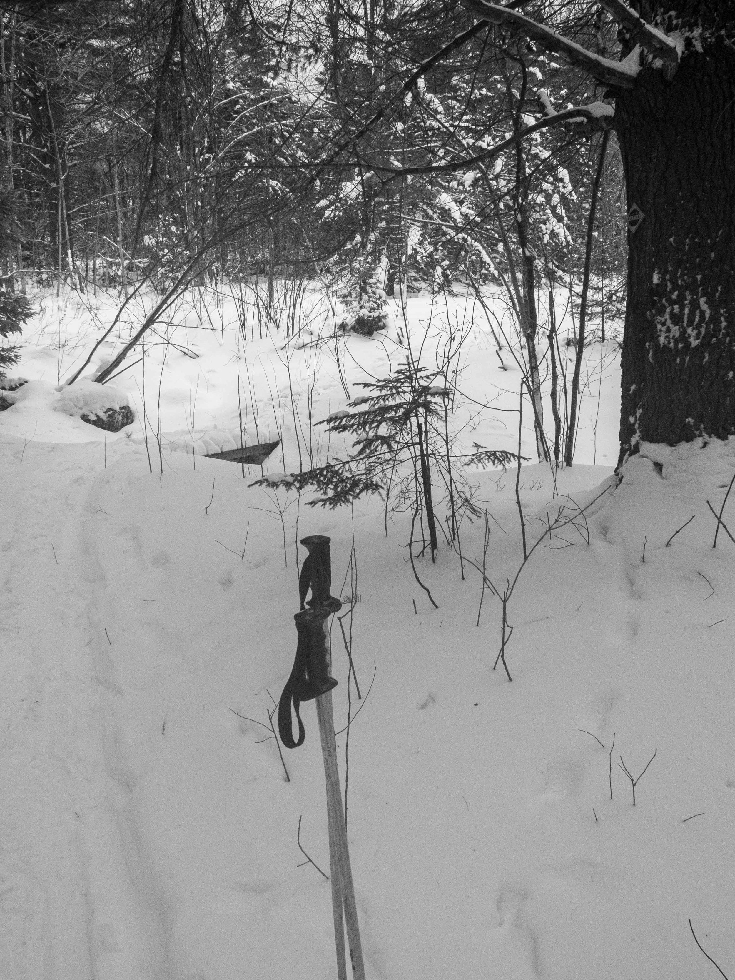 Once you crest the hill, you will drop back into a section of woods. There are two more small bridges you will cross. If you're on skis you'll have to side step up a small hill into the pasture above.