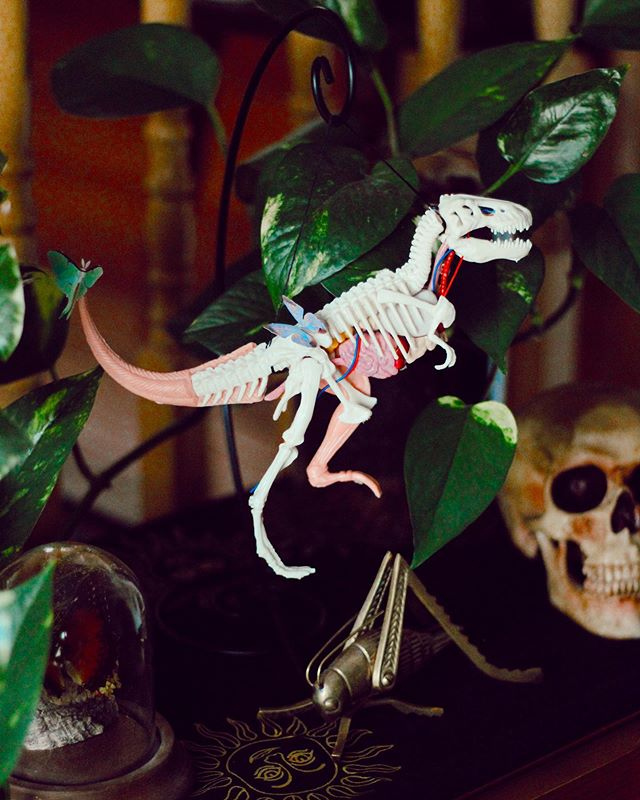 I feel like our whole house is a curiosity cabinet!🥰🌿🦖✨ ✖️ • • • • • #thrifter #vintagefinds #howyouhome #utah #handmade #art #plants #homedecor #terrarium #utahhome #homeinspo #retro #retrohome #pathosplant #utahblogger #plantmom #dinosaurbones #myart #butterlies #moths #cricket #skull