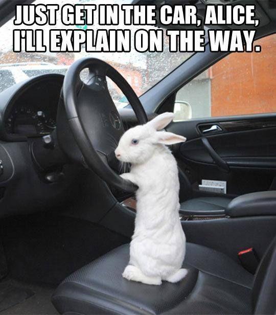 get in the car alice.jpg