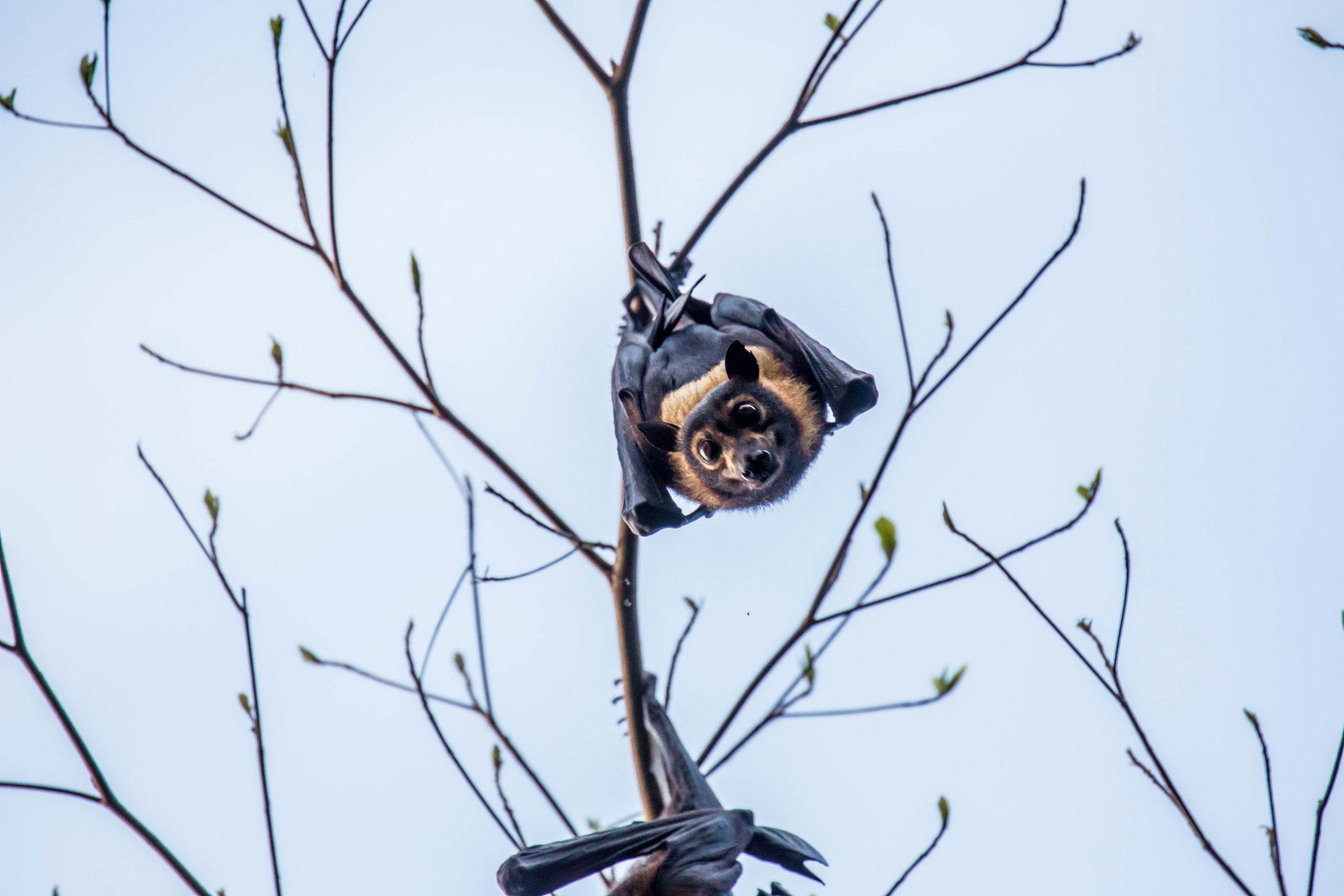 Photo-Organic-Australia-Photography-Wildlife-Safari-Northern-Territory-4.jpg
