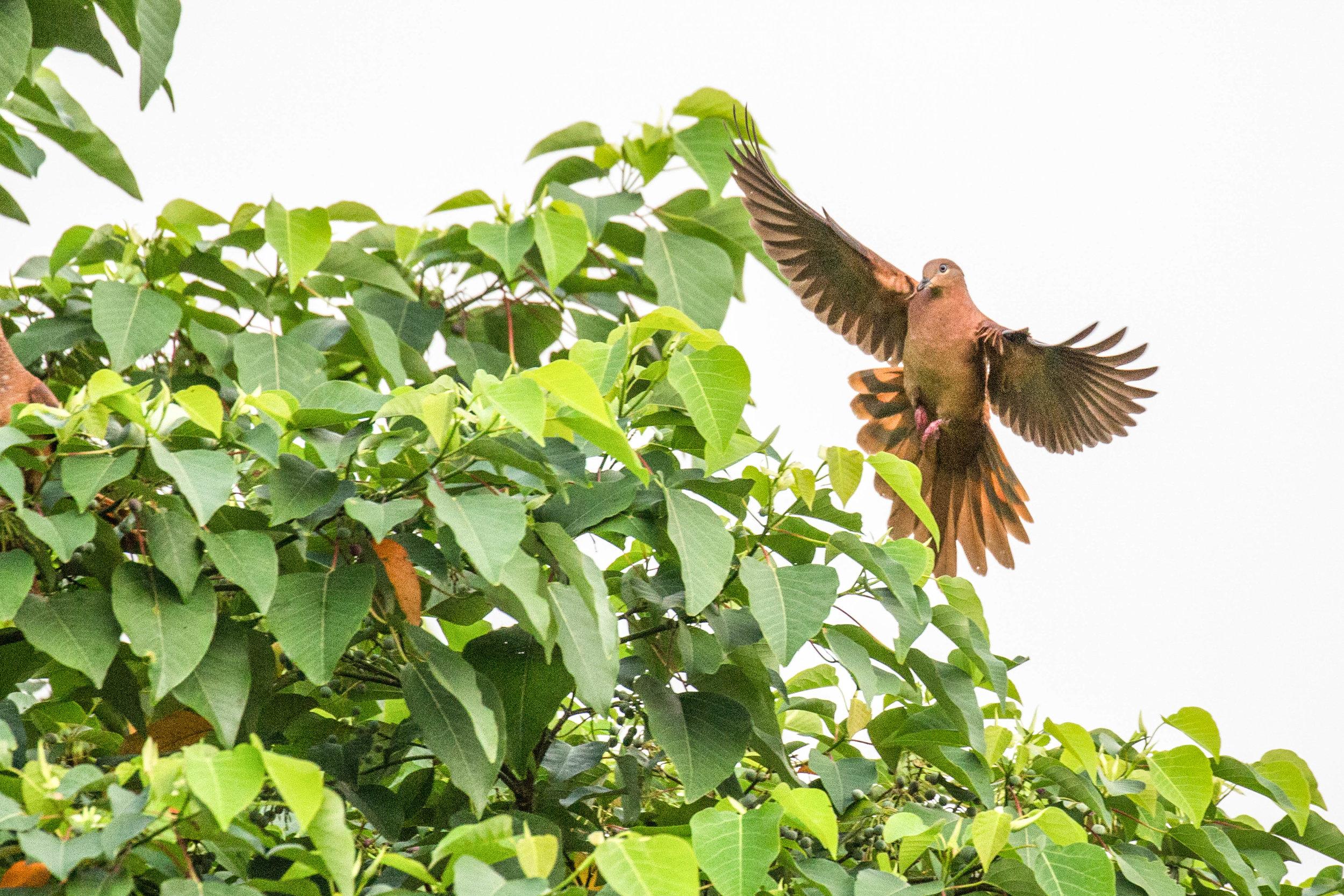 Photo-Organic-Australia-Photography-Wildlife-Safari-Northern-Territory-5.jpg