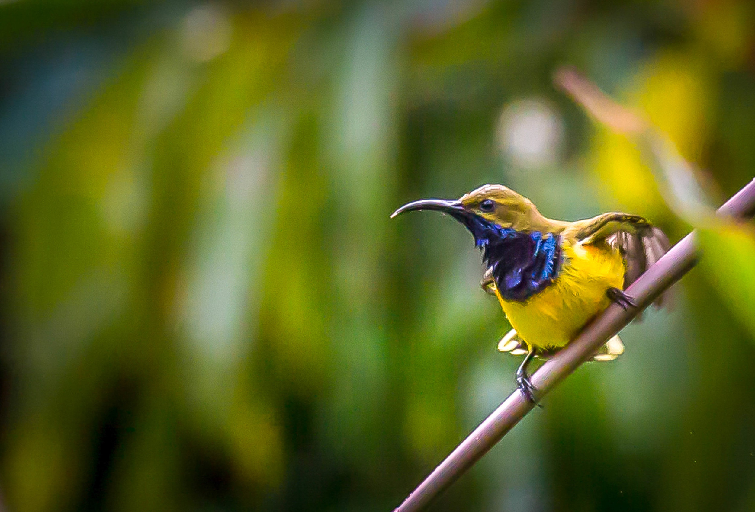 Photo-Organic-Australia-Photography-Wildlife-Safari-Northern-Territory-10.jpg