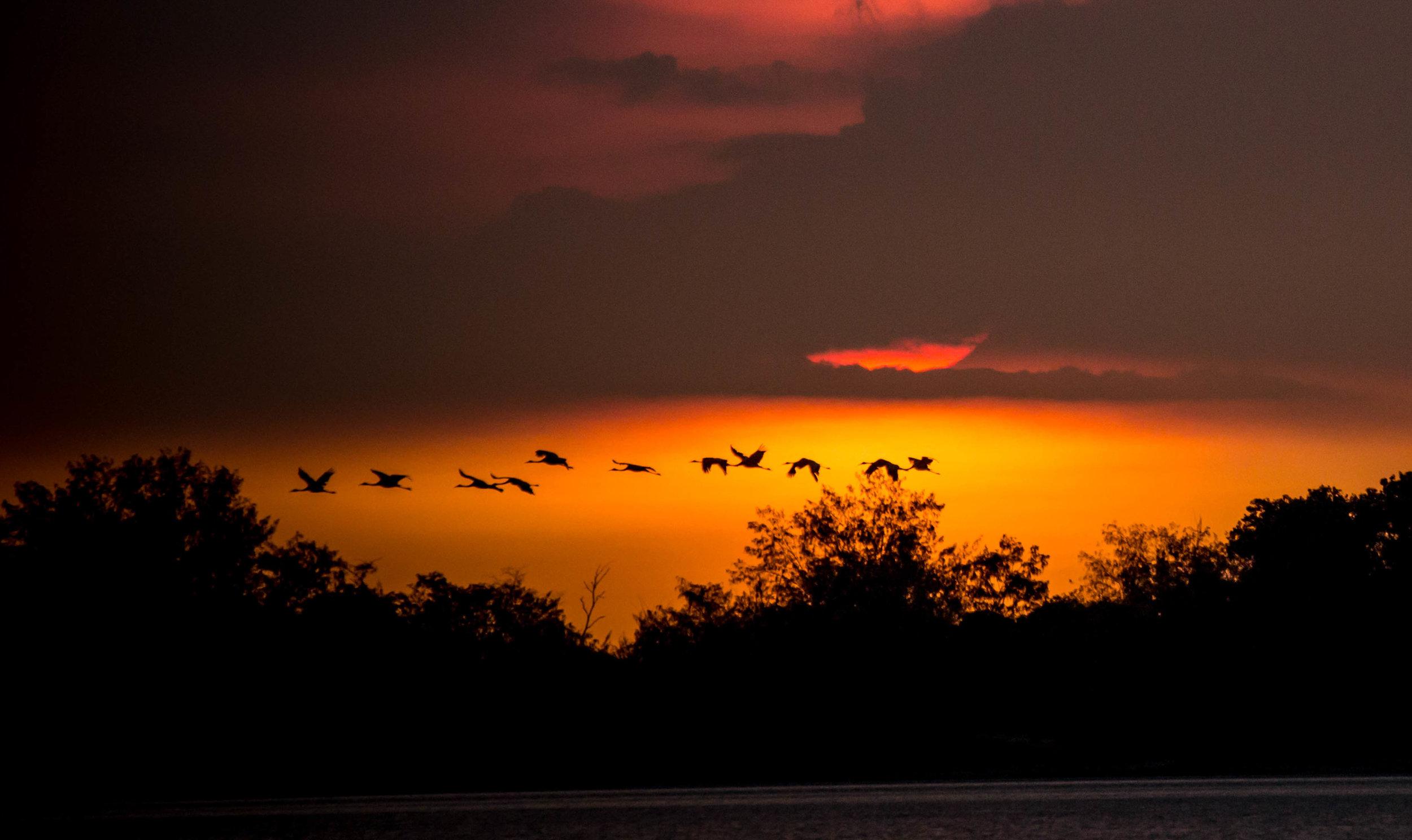 Photo-Organic-Australia-Photography-Wildlife-Safari-Northern-Territory-15.jpg