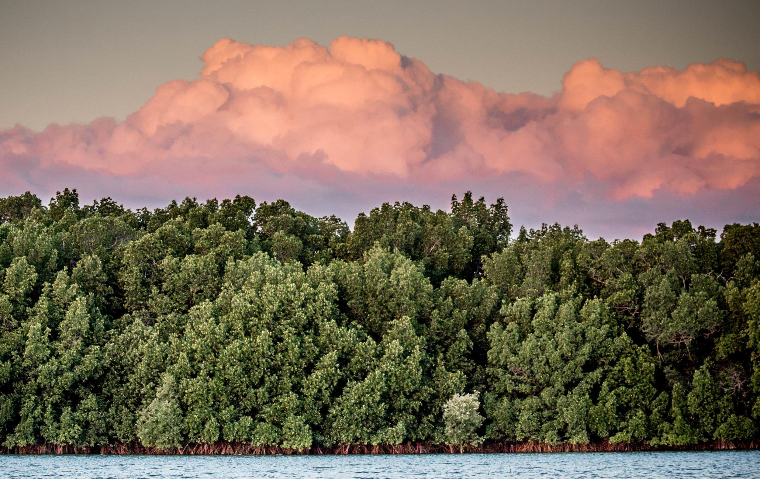 Photo-Organic-Australia-Photography-Wildlife-Safari-Northern-Territory-17.jpg