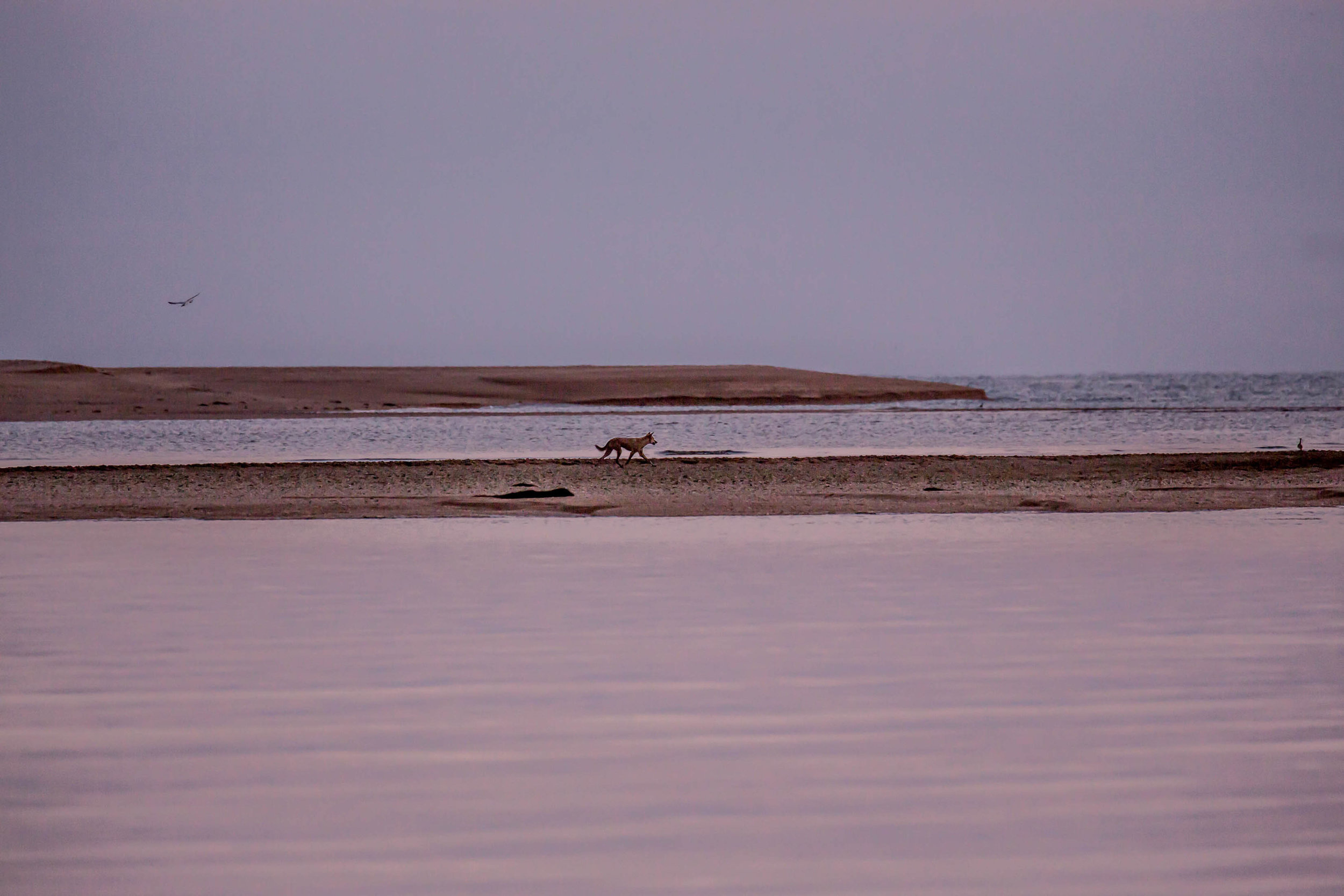 Photo-Organic-Australia-Photography-Wildlife-Safari-Northern-Territory-21.jpg