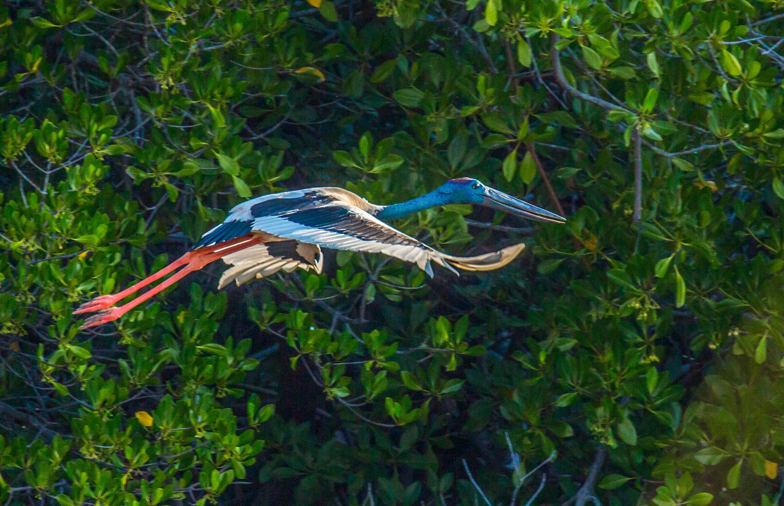 Photo-Organic-Australia-Photography-Wildlife-Safari-Northern-Territory-25.jpg