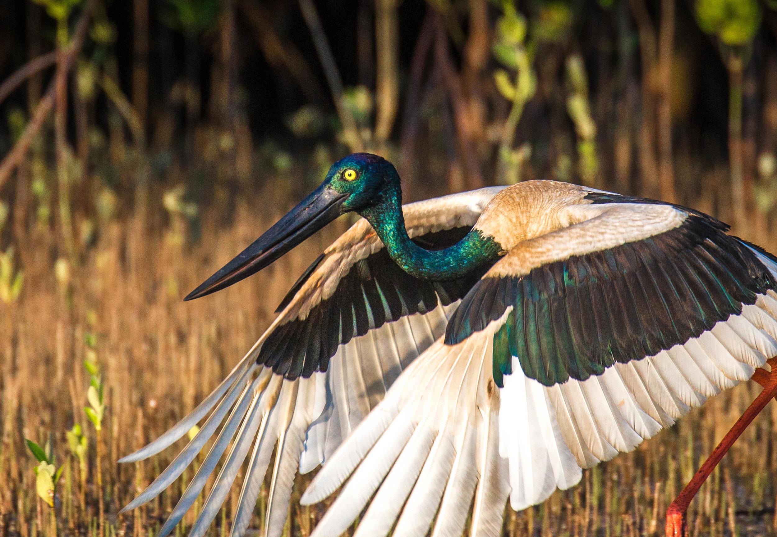 Photo-Organic-Australia-Photography-Wildlife-Safari-Northern-Territory-26.jpg