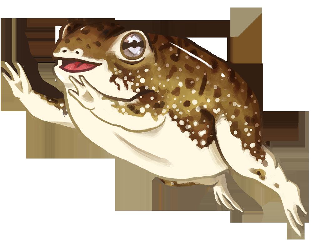 frog commission internet.png