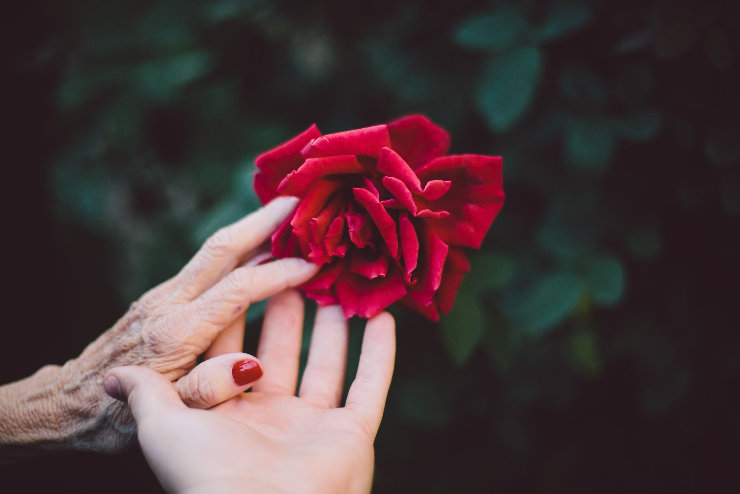 elderly hand and young hand with rose.jpg