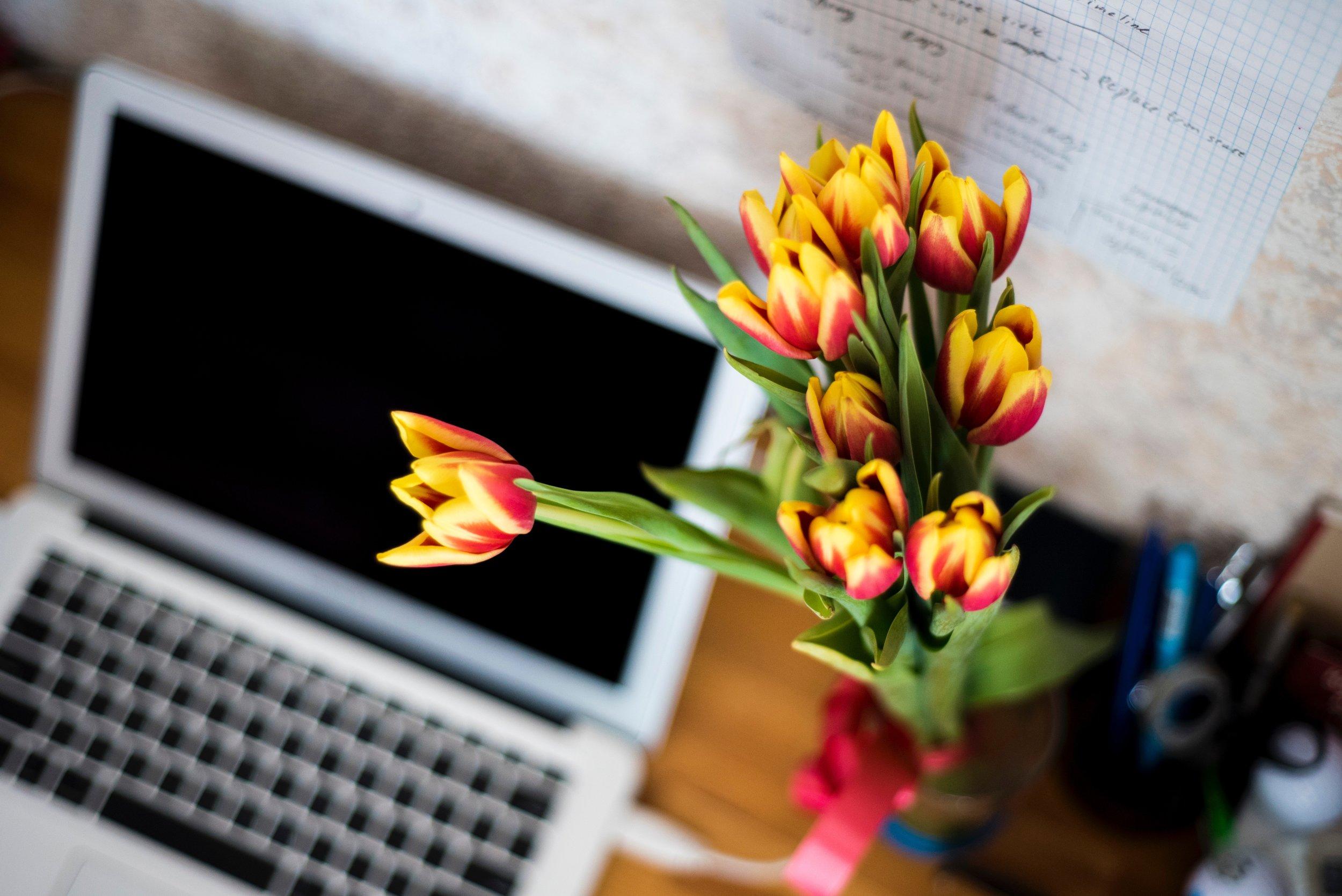 mac and tulips.jpg