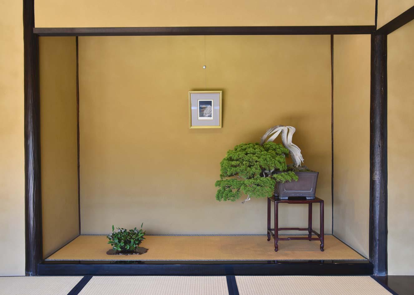 200 year old Juniper Bonsai at the National Bonsai Garden, Showa Memorial Park, Tokyo
