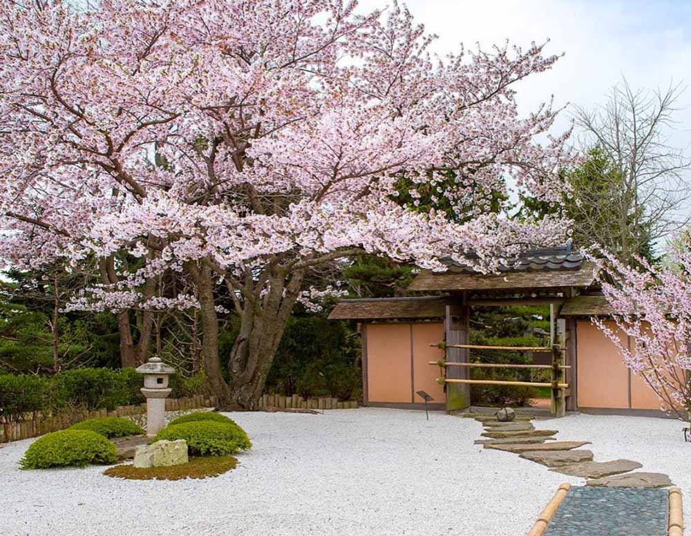 12 Stunning Japanese Gardens In America You Can T Miss
