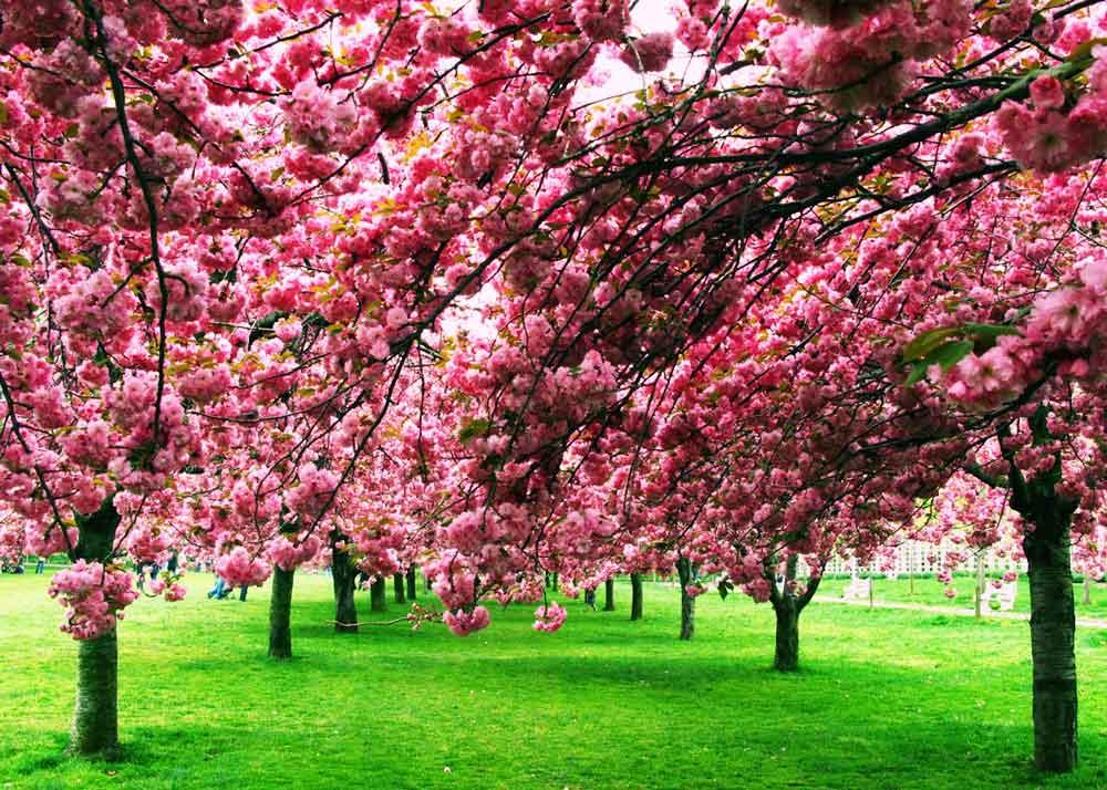 ©  Taís Melillo  /  Creative Commons , Brooklyn Botanic Garden