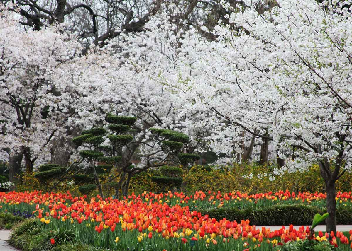 ©  Dallas Arboretum and Botanical Garden
