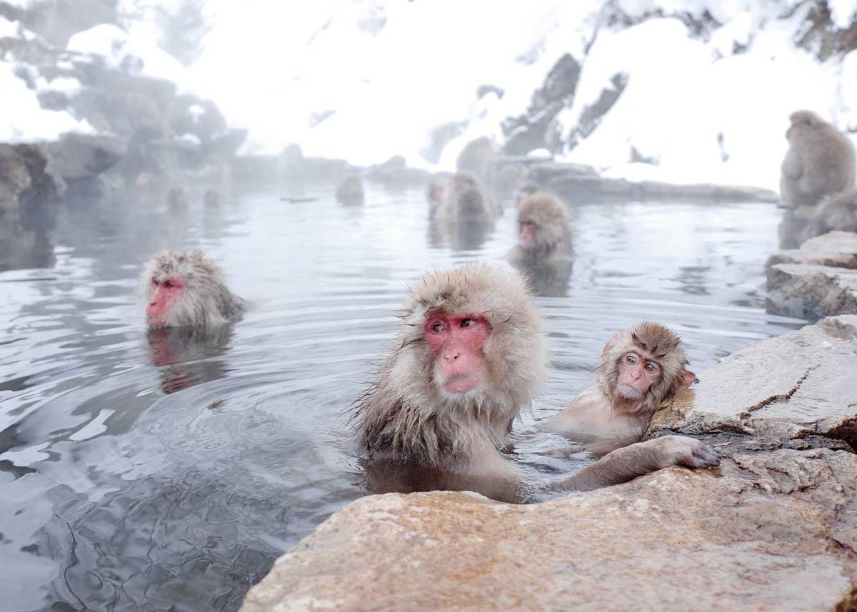 ©  Azkin  /  Creative Commons , Enjoying the Hot Springs